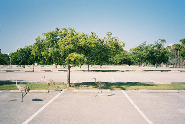 bird parking key biscayne