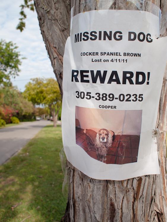 Cooper Lost Dog Key Biscayne