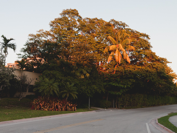 East Drive Tree at Sunset