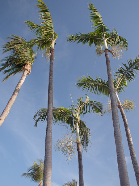 Five Palms in Key Biscayne