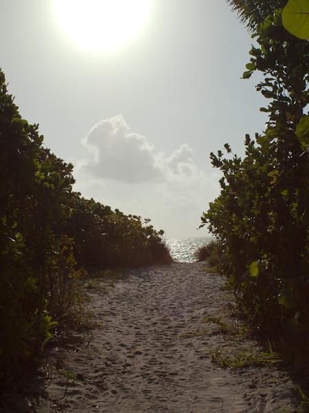 Forgotten Beach Path Key Biscayne