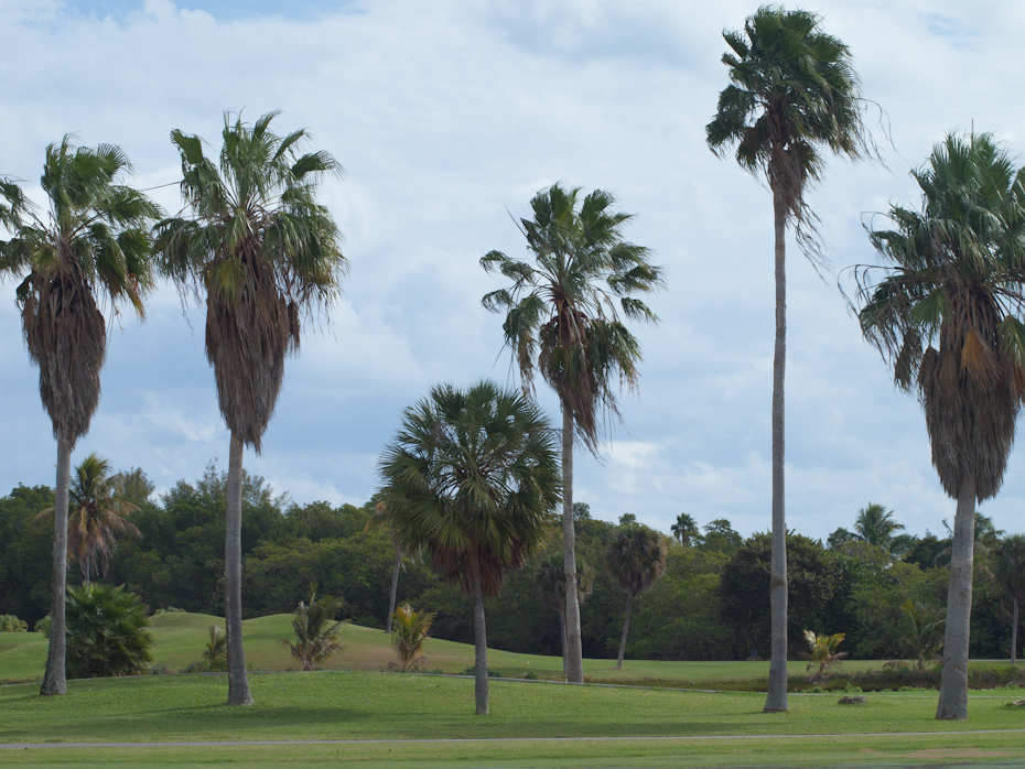 Golf Trees