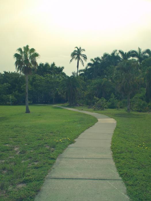Green sidewalk in Key Biscayne