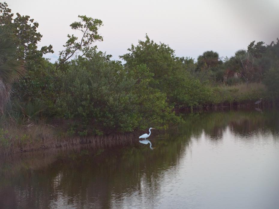 Birds on Lake KB