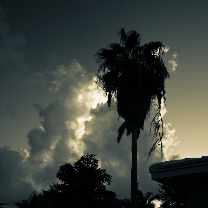Palm Tree in the Clouds Key Biscayne