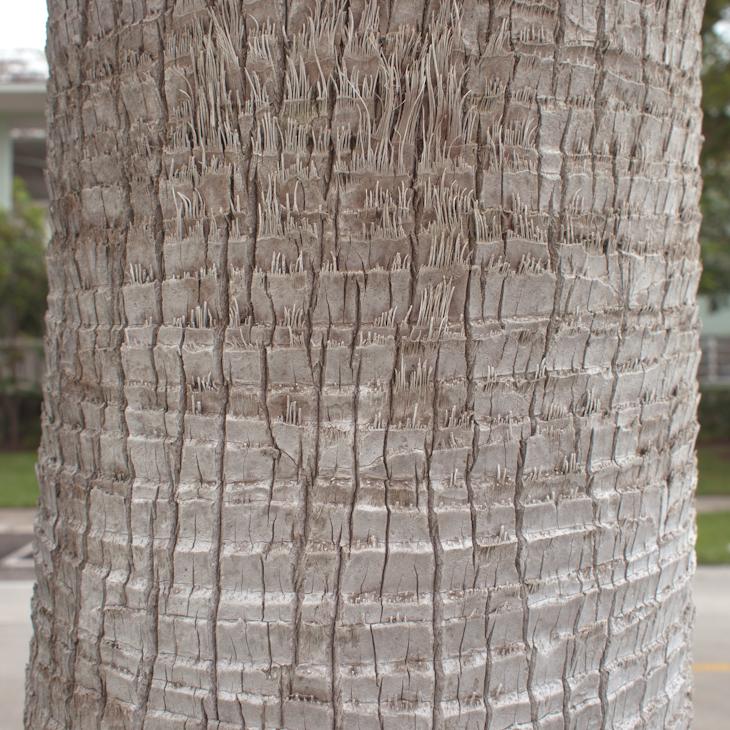 Palm Key Biscayne