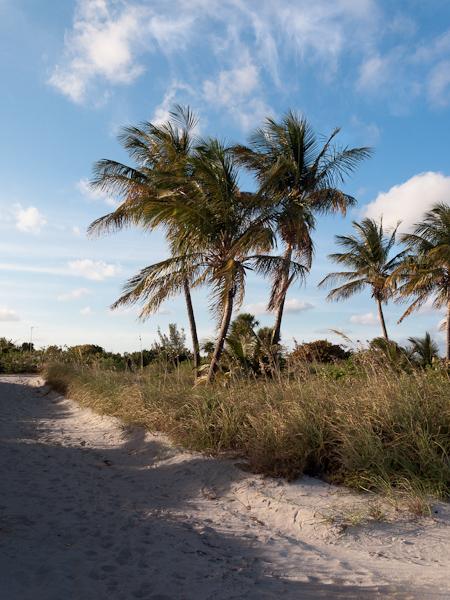Path and Palms at Crandon