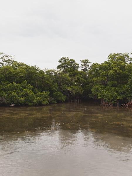 Mangroves in the Ski Hole