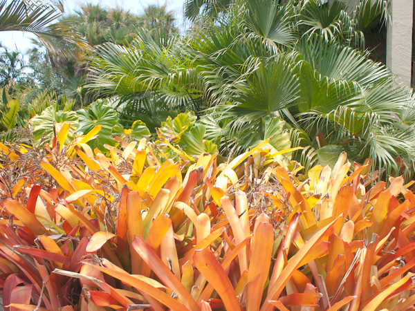 Colored Plants Key Biscayne