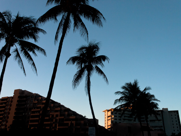 Something with some palms and buildings