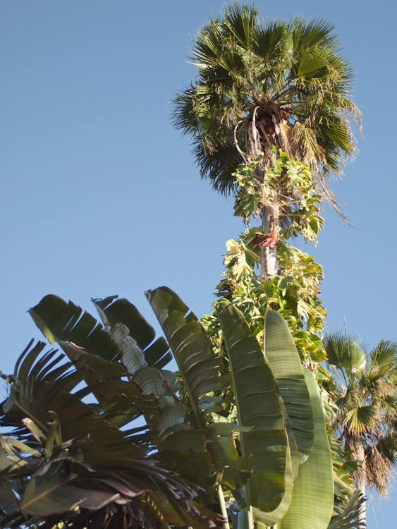 Tree Thing